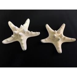 Stelle marine naturali corazzate. CM 5-7