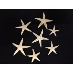 Set 100 stelle marine naturali. CM 2-4