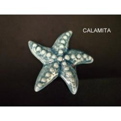 Stella marina porcellana con calamita. CM 5