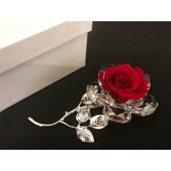 Rosa vera stabilizzata con base cristallo e metallo con scatola. CM 10