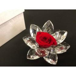 Rosa vera stabilizzata con base cristallo con scatola. Diam. 8
