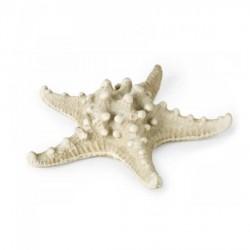 Stella marina in resina CM 14