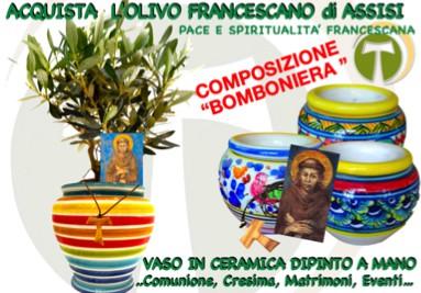 Olivo Francescano con vaso
